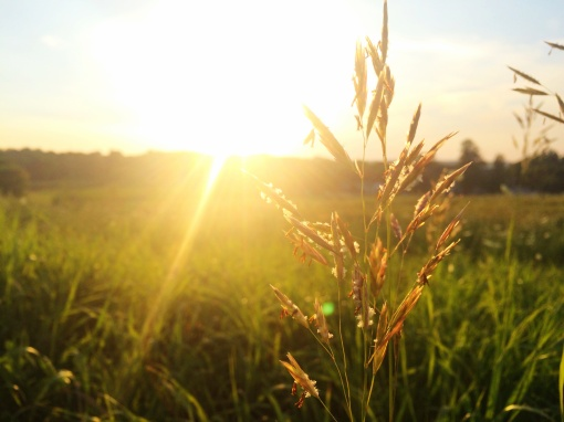 sunwheatgrass.unsplash